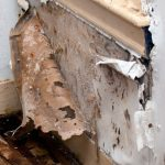 What every adjuster should know about fungi/bacteria exclusions