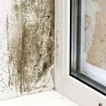 The Best Risk Management Tool For Mold Remediation